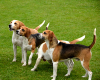 Ampleforth Hounds